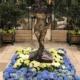 Miss Kawartha Midnight in Paris Garden